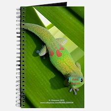 Rainbow Geckoe Journal