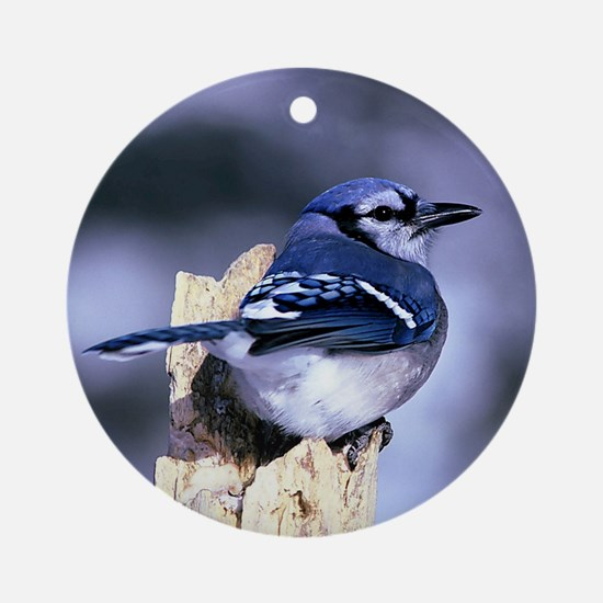 Cute Blue jay Round Ornament