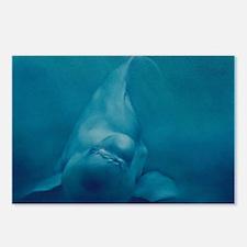 Beluga Smile Postcards (Package of 8)