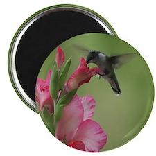 Hummingbird In Gladiolas Magnets