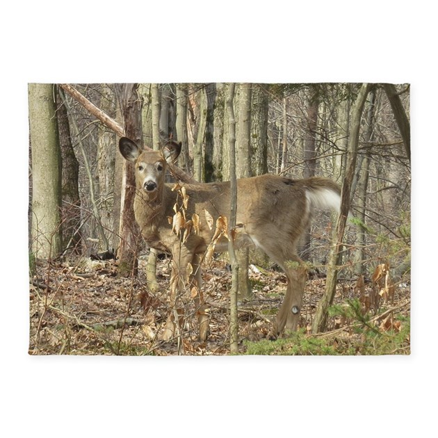 Whitetail Deer 5'x7'Area Rug By Admin_CP204606