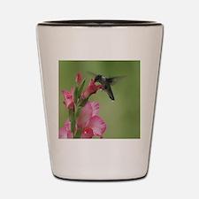 Hummingbird In Gladiolas Shot Glass