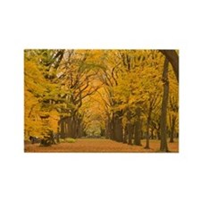 WALK IN FALL Rectangle Magnet
