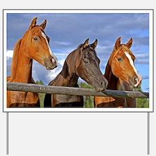 Three Horse Foals Yard Sign
