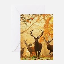 Deer In Autumn Forest Greeting Cards
