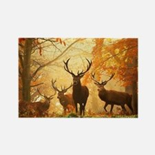 Deer In Autumn Forest Magnets