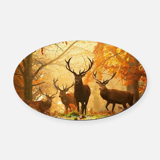 Deer In Autumn Forest Oval Car Magnet
