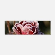 Rose With Frost On It Car Magnet 10 x 3
