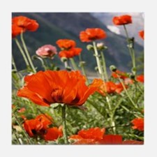bold red poppy flower Tile Coaster