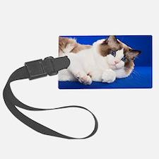 Cute Cats ragdoll Luggage Tag