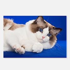 Unique Ragdoll cat Postcards (Package of 8)