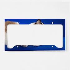 Unique Ragdoll cat License Plate Holder