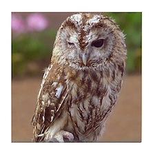 Winking Owl Tile Coaster