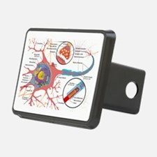 Neuron Cell Diagram Hitch Cover