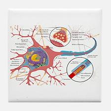 Neuron Cell Diagram Tile Coaster