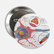 "Neuron Cell Diagram 2.25"" Button (10 pack)"
