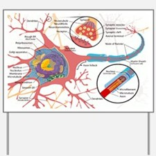 Neuron Cell Diagram Yard Sign