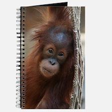OrangUtan20151004 Journal