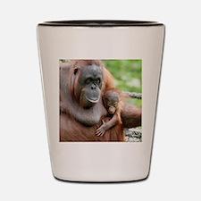 OrangUtan20151006 Shot Glass