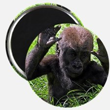 Gorilla20151001 Magnets