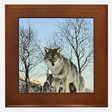 Pack Of Wolves During Winter Framed Tile