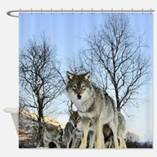 Pack Of Wolves During Winter Shower Curtain