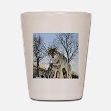 Pack Of Wolves During Winter Shot Glass