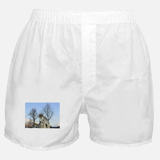 Pack Of Wolves During Winter Boxer Shorts