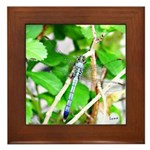 Perfection Framed Photo Tile