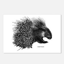 Crested Porcupine Postcards (Package of 8)