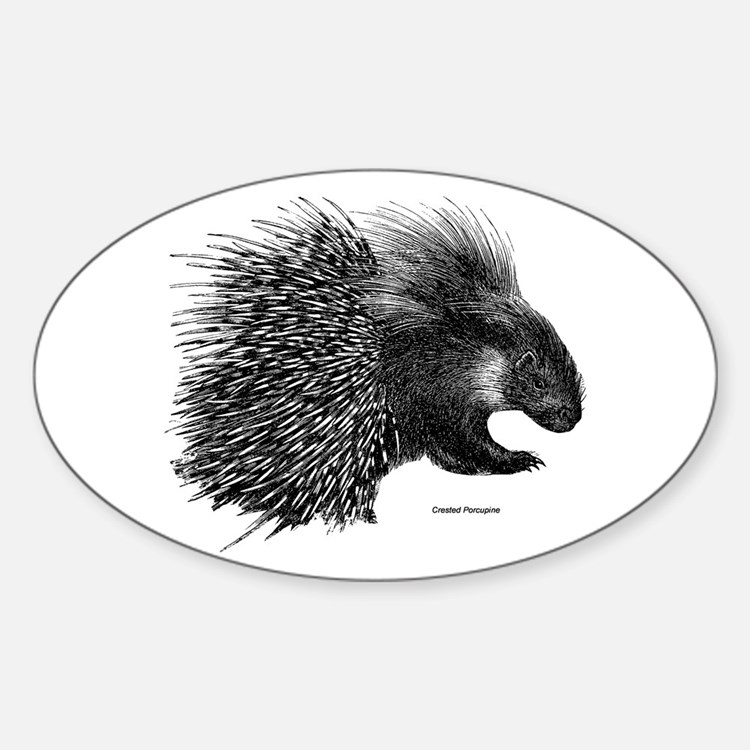 Crested Porcupine Oval Decal