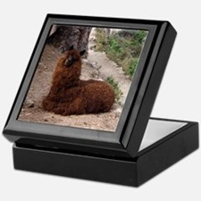 CUTE ALPACA Keepsake Box