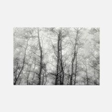 Aspen Tree Forest, Black & White Photograp Magnets