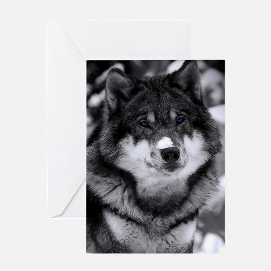Grey Wolf In Snow Greeting Cards