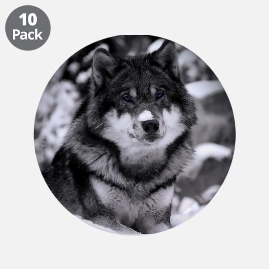 "Grey Wolf In Snow 3.5"" Button (10 pack)"