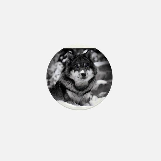 Grey Wolf In Snow Mini Button