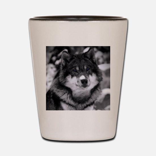 Grey Wolf In Snow Shot Glass