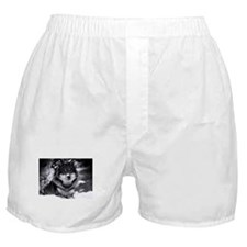 Grey Wolf In Snow Boxer Shorts
