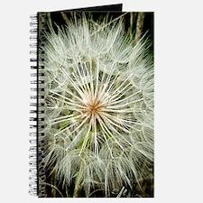 Puffball Closeup Journal