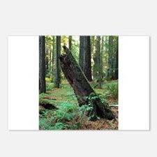 Mossy Giant Postcards (Package of 8)