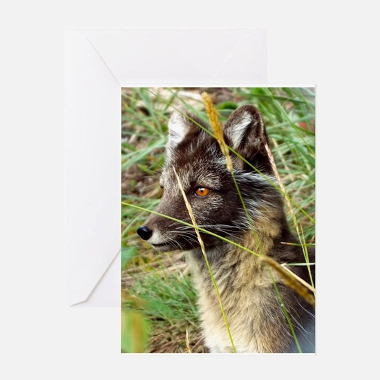 Watchful Fox Greeting Cards