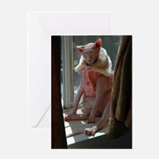 Funny Hairless cat lover Greeting Card