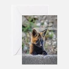 Curious Fox! Greeting Card