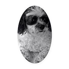 Black Gray White Shih Tzu Poodle M Oval Car Magnet