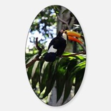 Toucan Decal