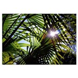 Palm leaves Posters