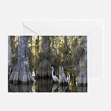 Cute Everglades Greeting Card