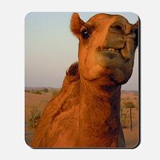 Camel in desert Mousepad