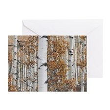 Aspen Greeting Card