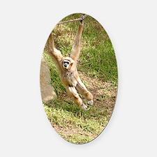 White Handed Gibbon Oval Car Magnet